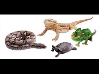 Reptile Food - Crickets, Woodies, Mealworms, Frozen Rats, Frozen Mice