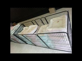 Dog Bedding now 1/2 price. Grand Opening Sale.  Were $69.95 now only $34.95.