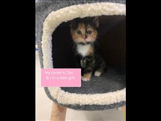 Rescue Kitten! - Cleo