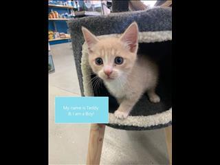 Rescue Kitten - Teddy!
