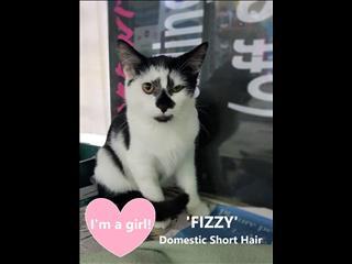 FIZZY! Rescue Kitten DESEXED