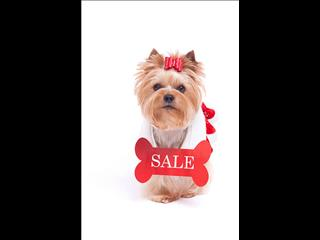 SALE THIS WEEKEND - MEET THE BOSS, HE'S CUTTING COSTS!!
