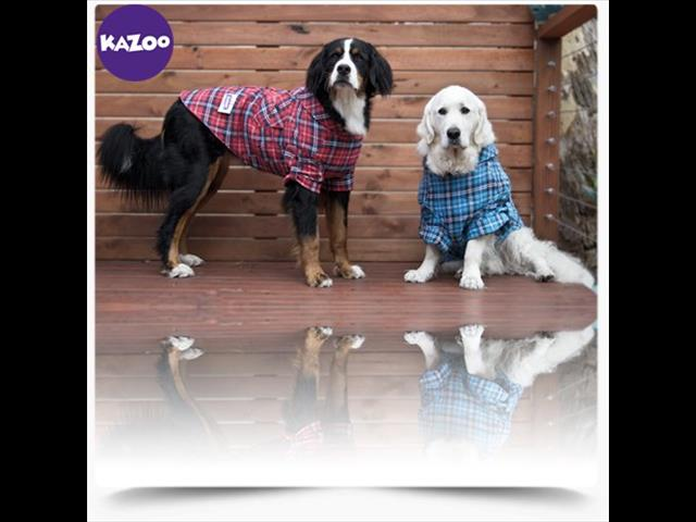 Kazoo Dog Jumpers! - Call now
