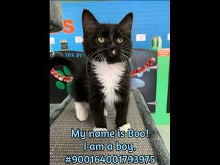 Gorgeous Rescue Kittens!! FREE DE-SEXING*