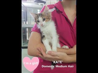 KATE! Rescue Kitten !