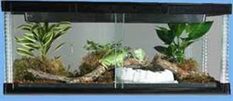 Reptile Visionarium Glass tanks available now (reduced to clear, while stocks last)