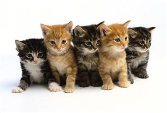 KITTENS WANTED