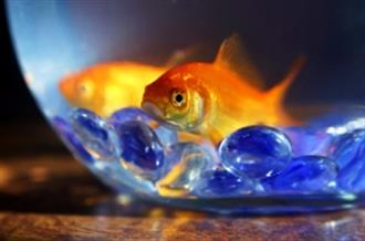 YXY1 Assorted Fish Bowls Available (reduced to clear, while stocks last)