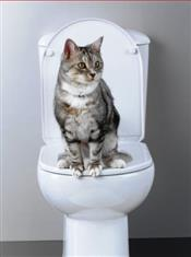 WXW2 Cat Litter Kitter System, No More Kitty Litter Ever (reduced to clear, while stocks last)