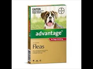 ADVANTAGE FOR DOGS 10-25KG 4PK - www.thepethouse.com.au