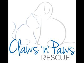 RESCUE PET - Claws 'n' Paws Rescue Adult Cats. Currently with Carers ... Looking for Fureva Homes.