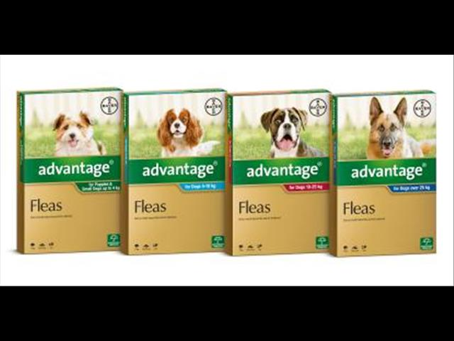 Advantage for Dogs (Flea Protection)