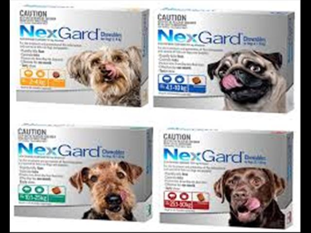Nexgard for Dogs.  At Puppy Palace Pet Shop, Underwood. 073808 2880