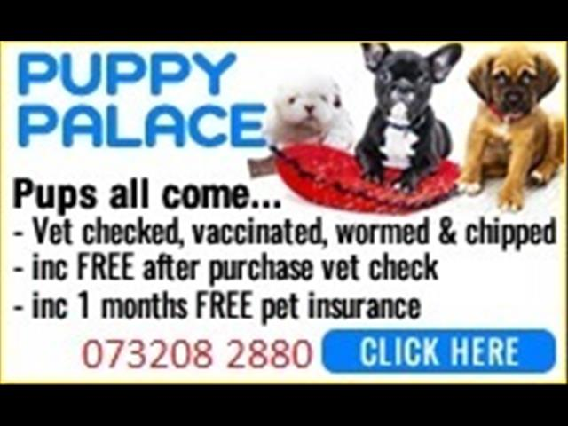 Pups Wanted .....Call [@Name value='Puppy Palace Pet Shop on 07 3808 2880  or After Hours on 0408985133