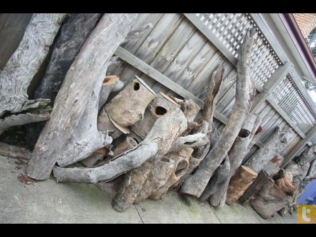 Hollow Logs