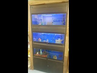 DISPLAY AQUARIUM - 3x 4FT TANKS ON GALVANISED STEEL FRAME, WITH LIGHTS, FILTERS, AND MORE